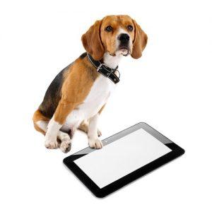 hond met tablet