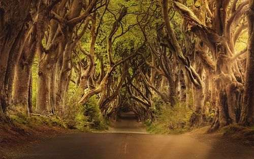dark hedges ierland